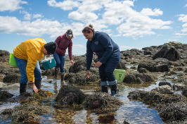 participants in a UNH Cooperative Extension Seaweed Mania Workshop