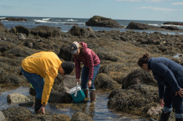 students foraging for seaweed