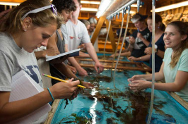 UNH students working in the Shoals Marine Laboratory