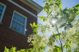 Sunlight through a tree branch on the UNH campus in Durham, NH