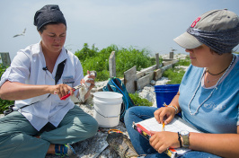 UNH researcher Liz Craig is leading a research team on White Island and Seavey Island to look at the only Tern colony in New Hampshire