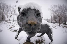 unh wildcat statue