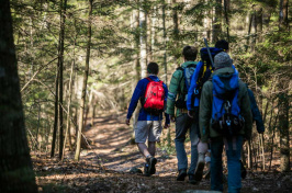 Students hiking in UNH's College Woods