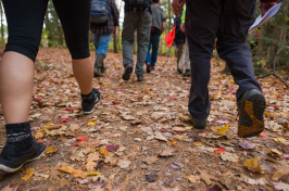UNH students walking on a trail in College Woods