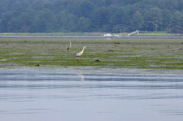 image of the great bay, photo credit: NHPR