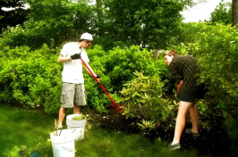 UNH students trimming hedge rows on campus