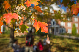 leaves in fall at UNH