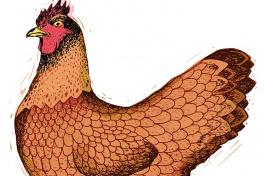 N.H. Red Hen