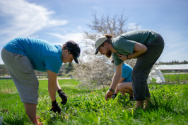 UNH students weeding a garden