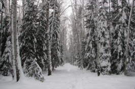 Snowy trail in a northern forest