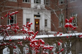 winterberries on campus
