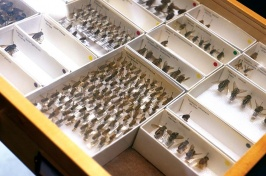 Insect library