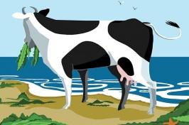 Seaweed/cow illustration