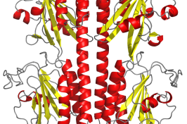 The PDE6 crystal structure used for the research.