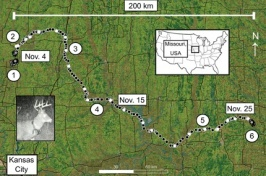 Map of Missouri with deer's track overlaid