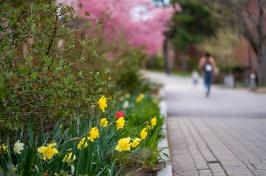 campus foliage in spring