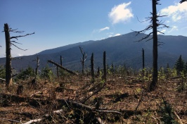 Researchers will use drone-based Light Detection and Ranging to identify and predict forest features critical for snowshoe hare and American marten in the Northern Forest.