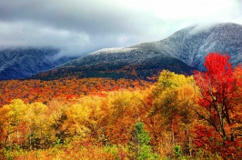 Photograph showing the forests in Northern New Hampshire