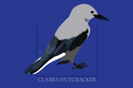 graphical image of a bird