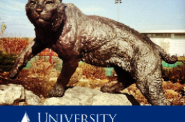cat sculpture on unh webpage