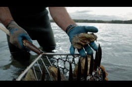 Making Reefs Out of Unsold Oysters