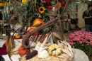 cornucopia at UNH local harvest dinner