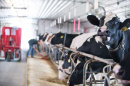 UNH Milk - Fairchild Dairy