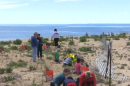 students plant seagrass on Plum Island