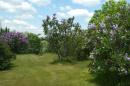 Lilacs at Woodman Farm at UNH