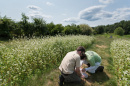 UNH bee researchers