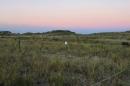 grass on New Hampshire's coastline
