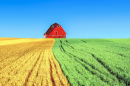 a field of crops with barn and sky in background
