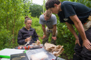 UNH students conducting research in a shrubby area