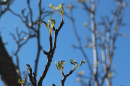 tree branch with buds