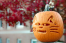 pumpkin carved like a UNH wildcat