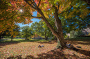UNH students lying under trees on Thompson Hall lawn in autumn