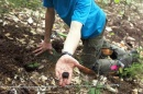 UNH doctoral candidate Ryan Stephens finds a truffle in the Bartlett Experimental Forest