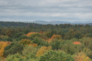 Landscape view of forest with mountains in distance
