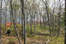 prescribed fire use in a forest