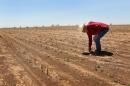 a farmer bending over in a field
