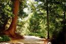 Image of woods, pexels.com