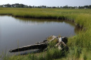 A salt marsh in the Little River estuary in North Hampton. The tree stump is likely an Atlantic White Cedar from pre-settlement times. (Photo courtesy of David Burdick, Jackson Estuarine Laboratory)