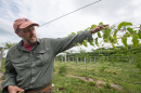 Iago Hale has planted and is researching a hardy variety of the kiwi that could thrive in New England's climate