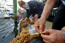 a team of marine scientists survey invasive species at Pope Island Marina in Massachusetts