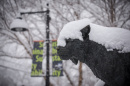UNH Wildcat with snow on snout