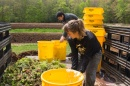 students adding content to compost buckets