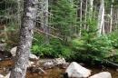 Acadia stream