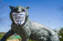 Wildcat statue wearing protective mask