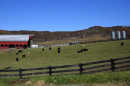 Photo of rural farm land with cows