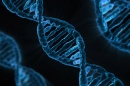 UNH Researchers Discuss New DNA-Editing Technology at Science Café March 1
